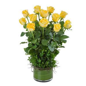 Impulse (Yellow), Arrangement of 12 Long Stemmed Yellow Roses in a Low Glass Vase