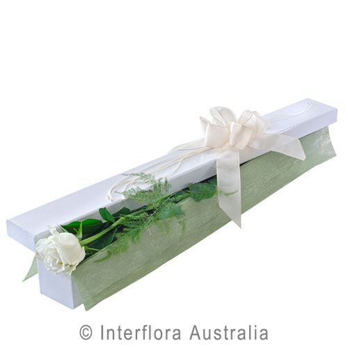 First Kiss (White), Single Long Stemmed White Roses in Presentation Box