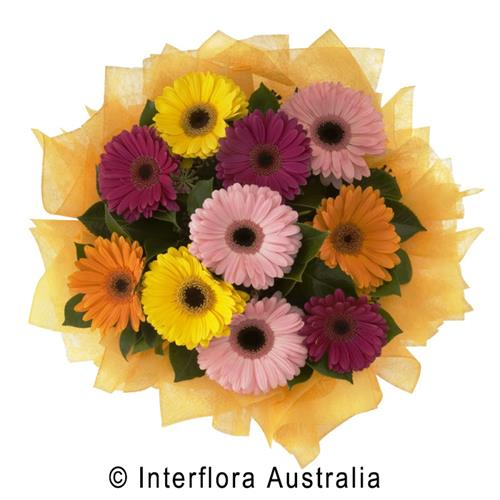 Cosmopolitan, Bouquet of Mixed Gerberas