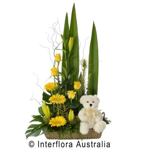 Congrats! - Teddy's Gift, Modern Flower Basket with Bear